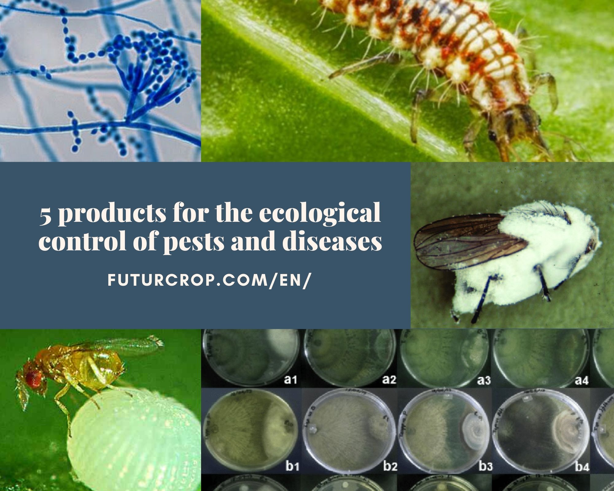 5 products for the ecological control of pests and diseases