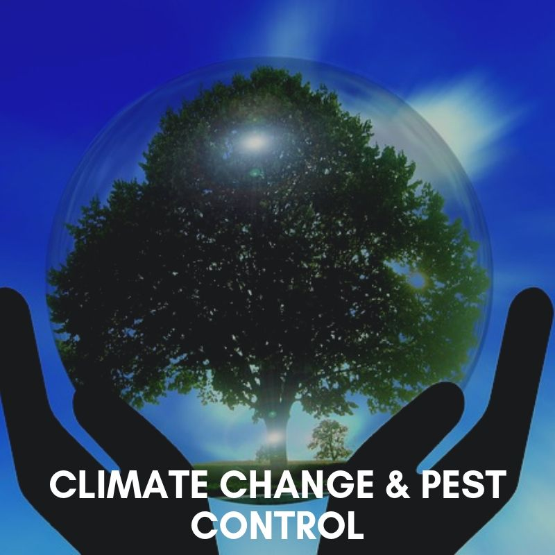Potential effects of climate change of insect pest dynamics