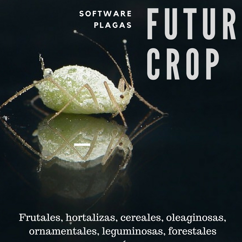 Optimized treatment of aphids using FuturCrop
