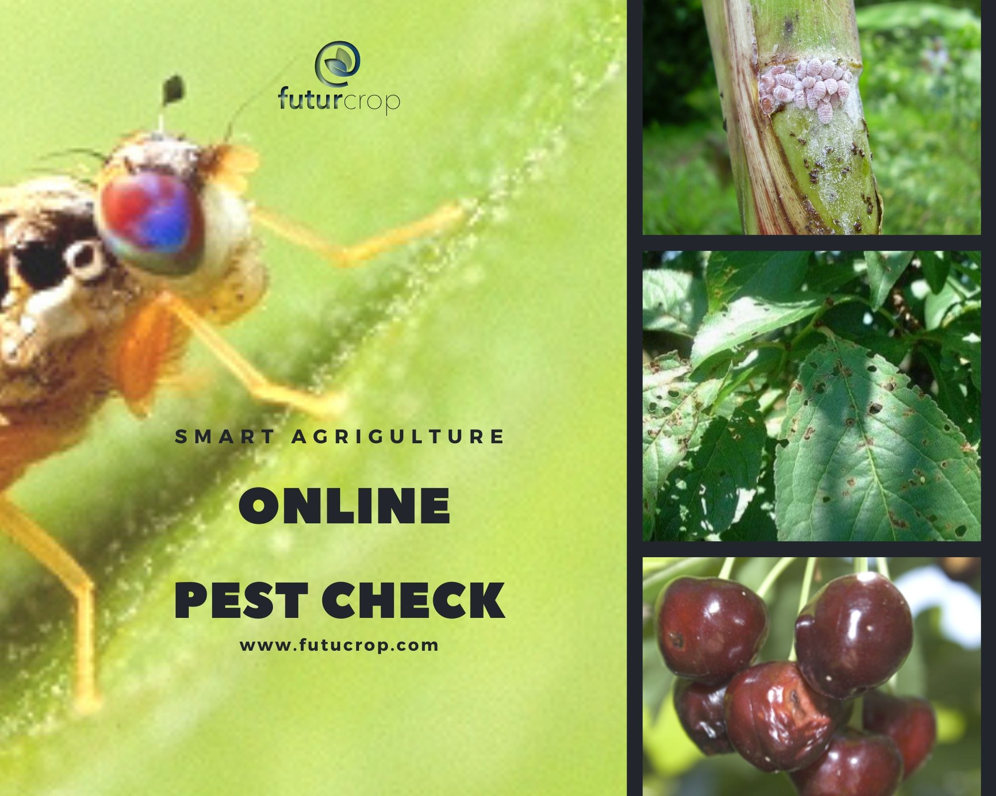 Online pest identification tool, by type of crop damage.