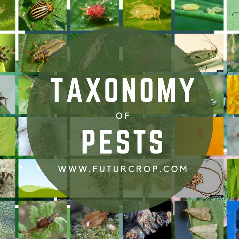 Taxonomy of pests